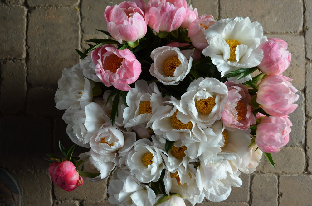 Fresh-cut peonies at Hauser Creek Farm