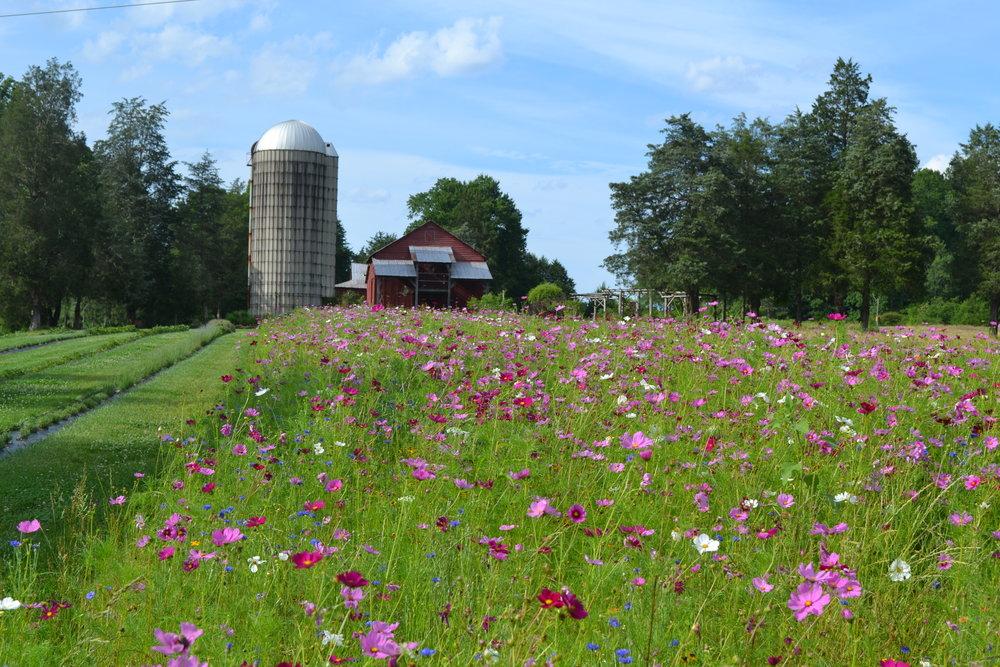 Hauser Creek Farm in Full Flower