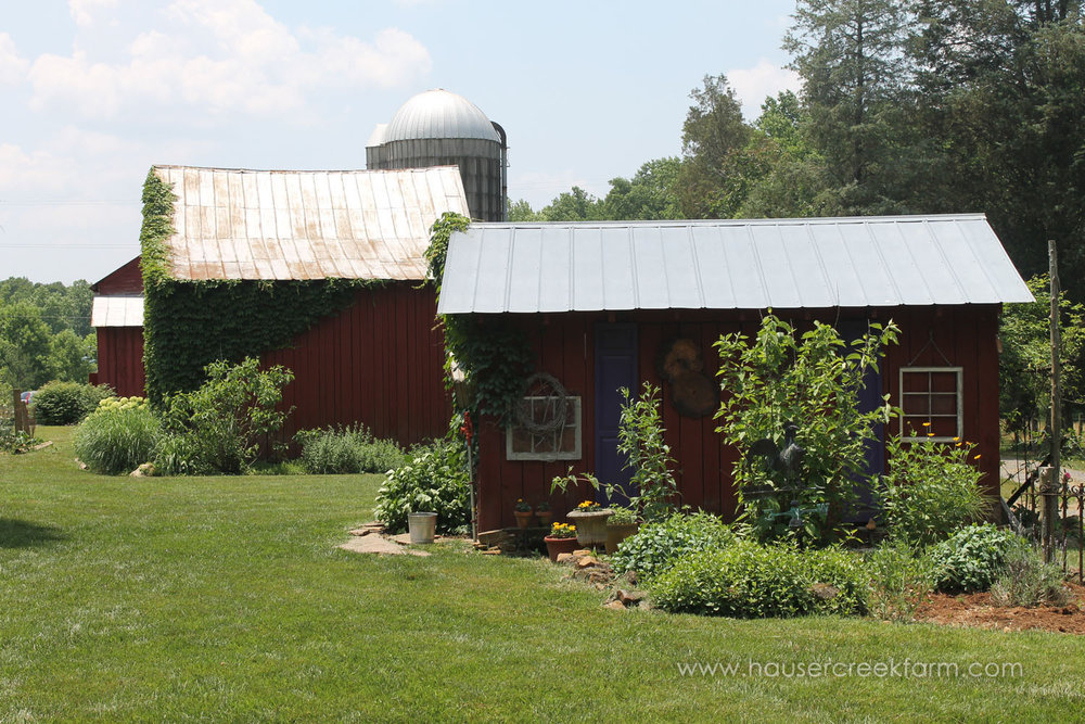 hauser-creek-farm-spring-open-farm-day-melody-watson-photo-1512.jpg