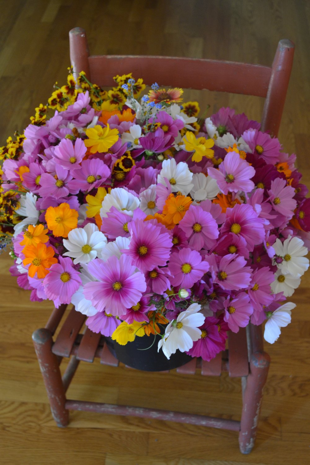 Bucket of fresh-picked flowers at Hauser Creek Farm