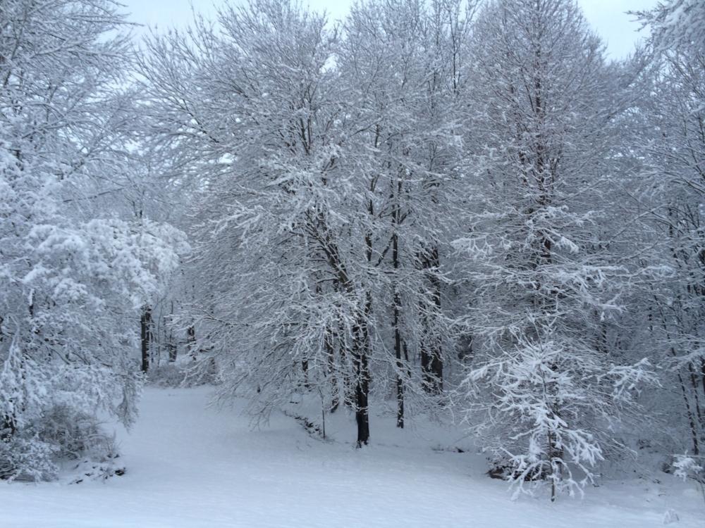 Winter wonderland in my back yard, February 2015