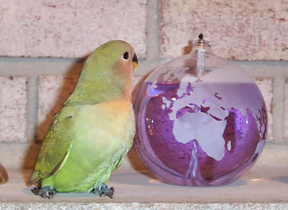 med_green_baby_JM_jpg.jpg