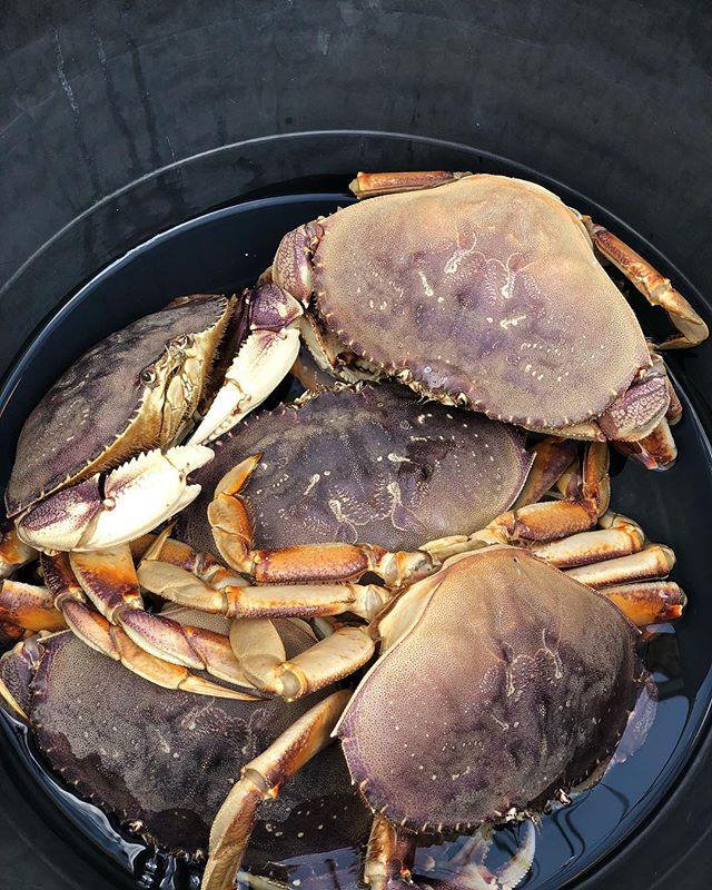 Seafood Sunday!