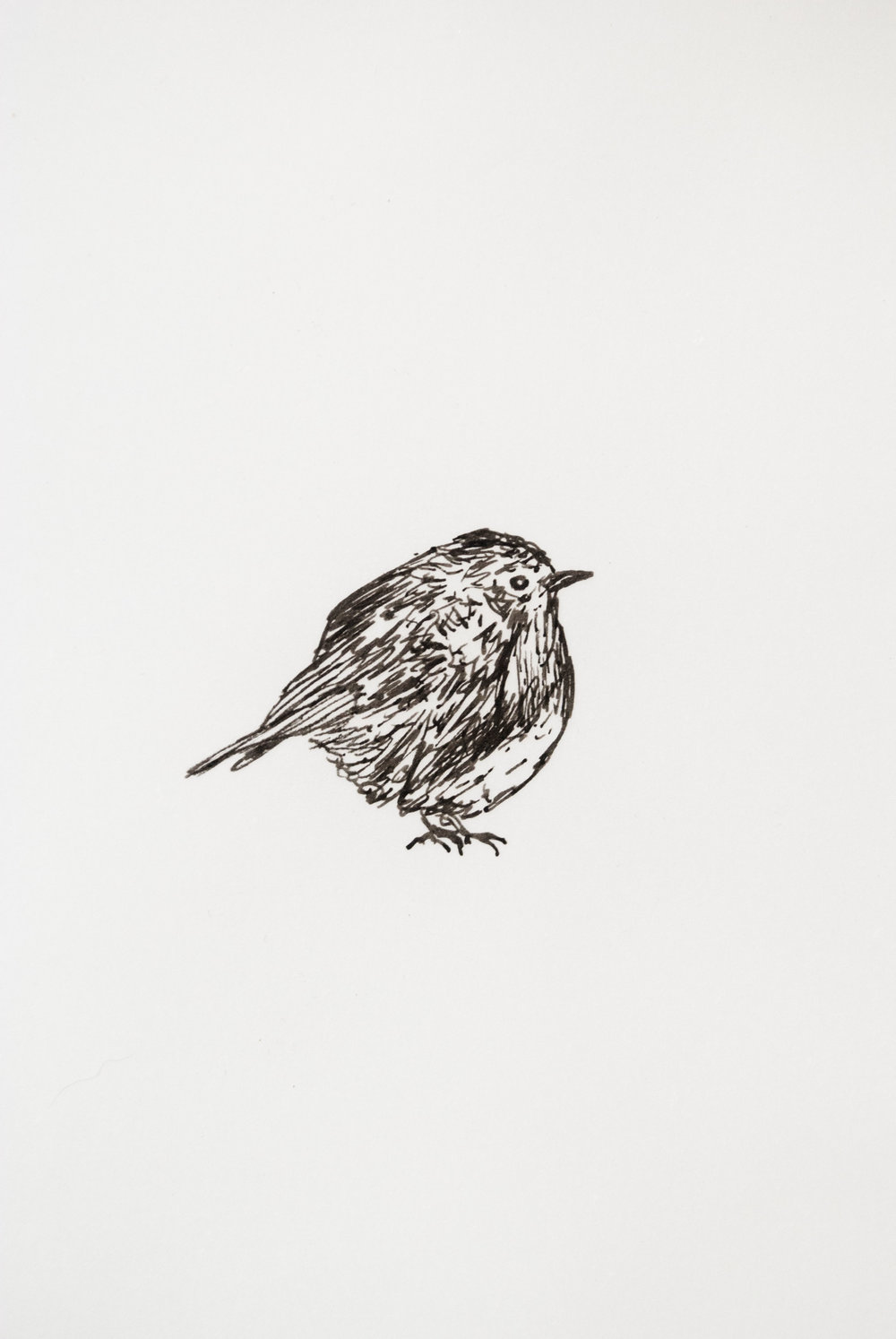 drawing bird printmaking sketchbook