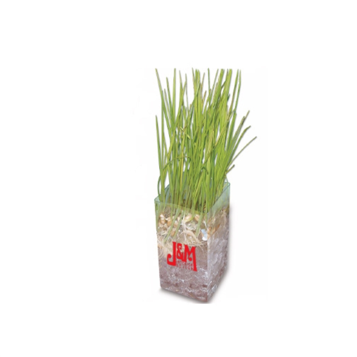 Wheatgrass promotional gift