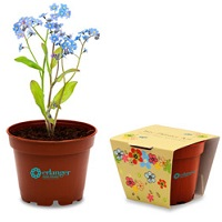 Mini plant conference and promotional gift
