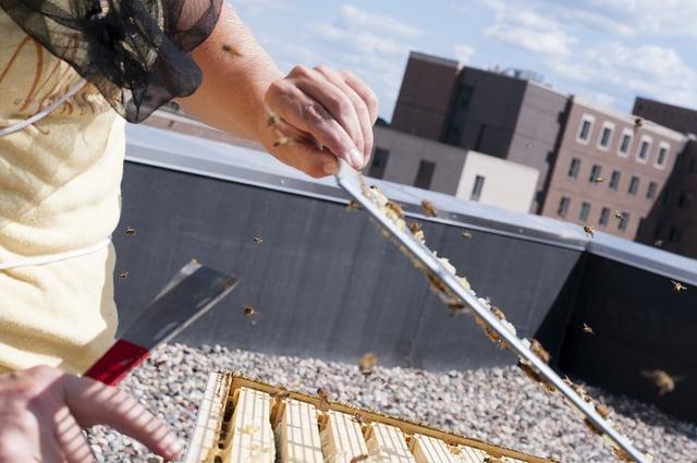 urban-beehives.jpg
