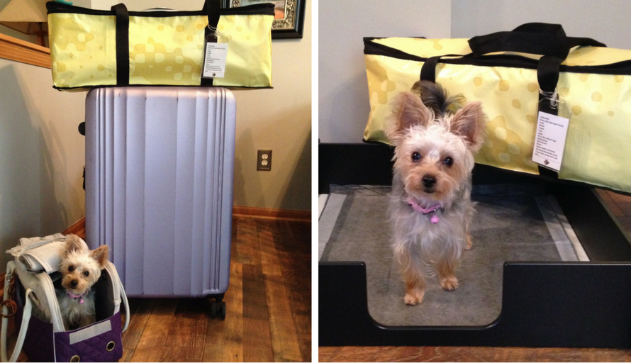 Custom pet travel system designed and created for Potty Rink