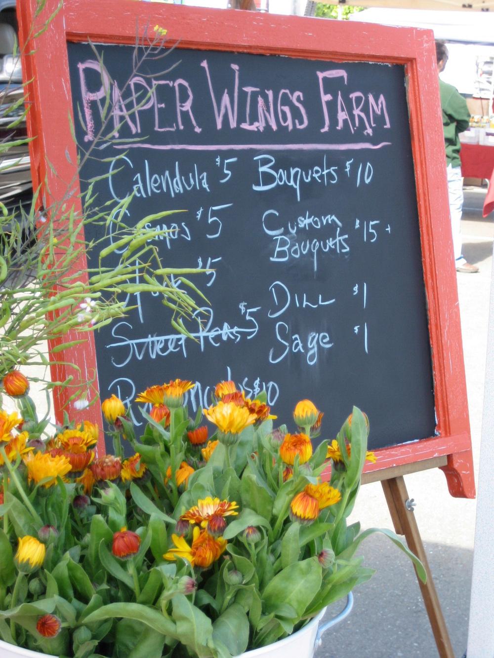 willschelsea-paperwingsfarm-8.jpg