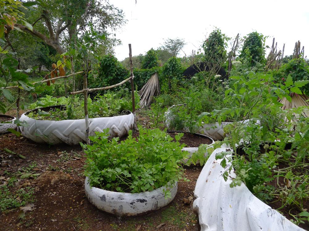 Hobonil Garden Tzucacab - Devon Sampson (1 of 1).jpg