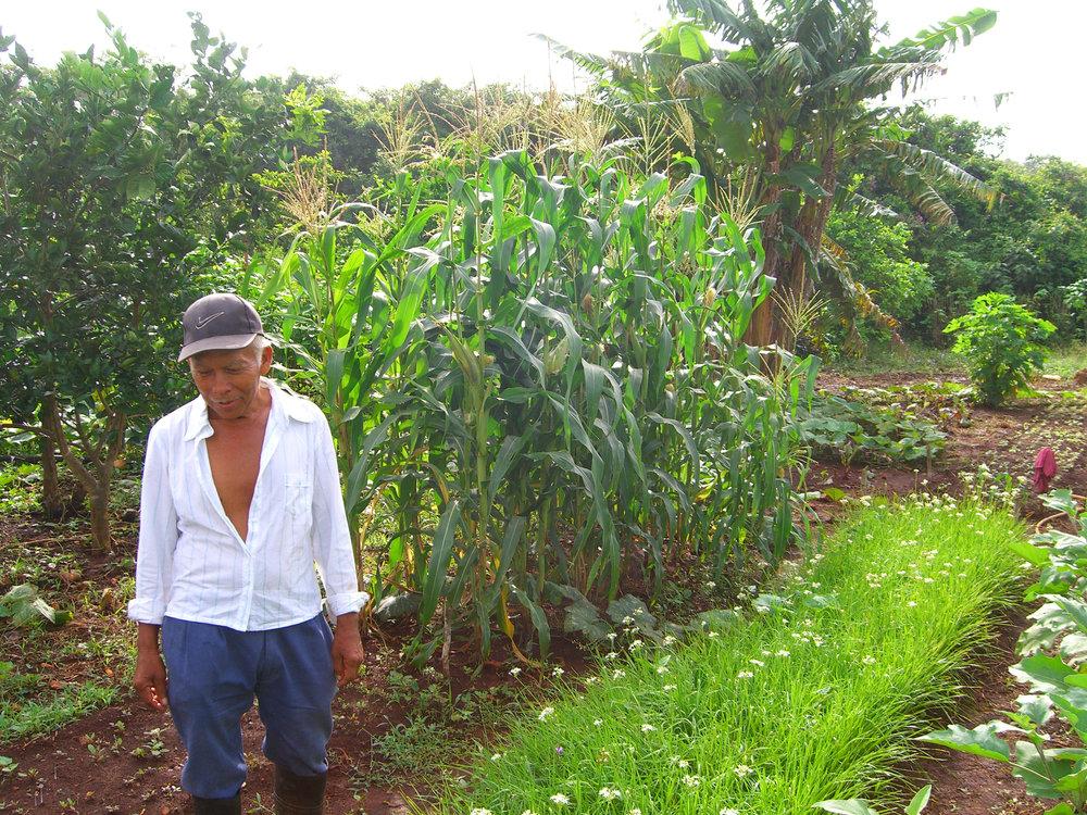 Ek Balam Garden Agrobiodiversity - Devon Sampson.jpg