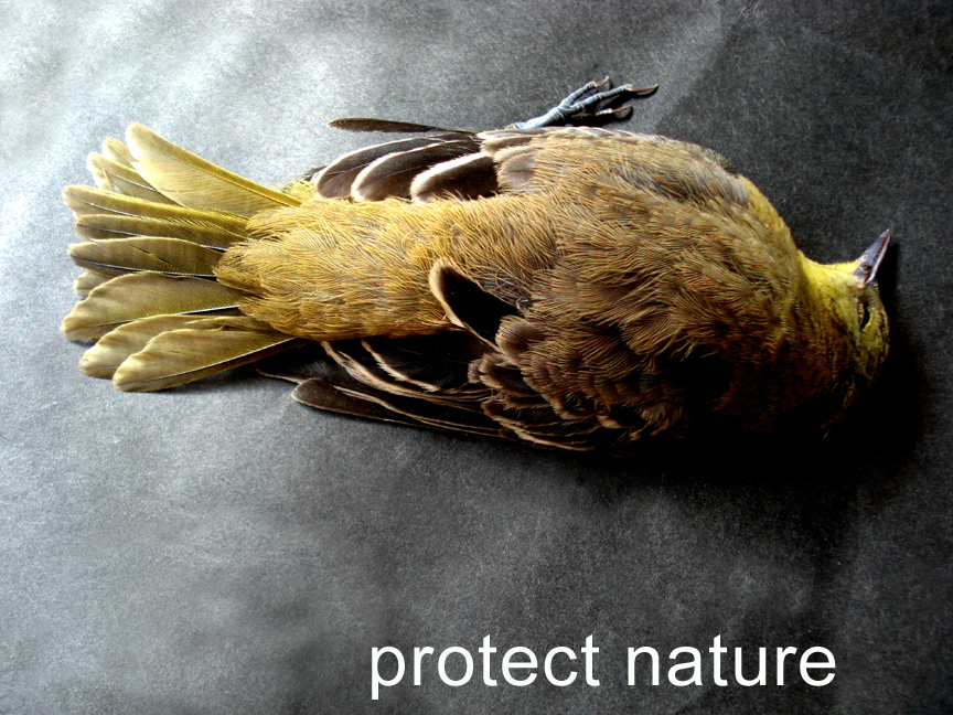 mdevine_protect nature copy.jpg