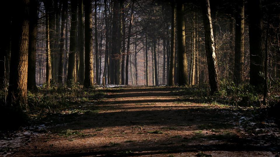 forest-2000034_960_720.jpg