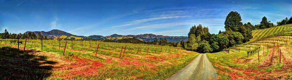 HDR Panorama from Napa Valley