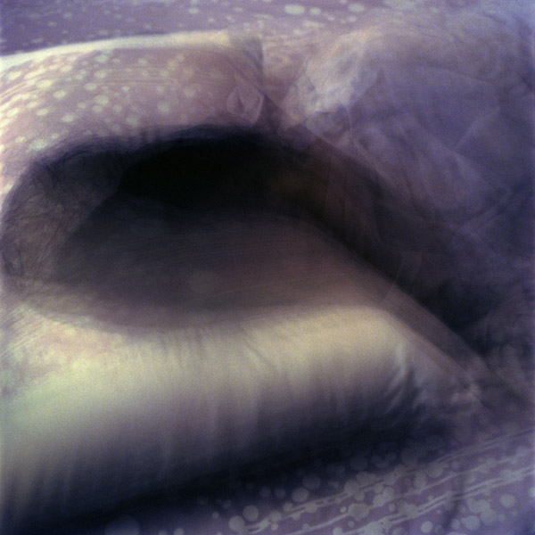 lavender08.jpg
