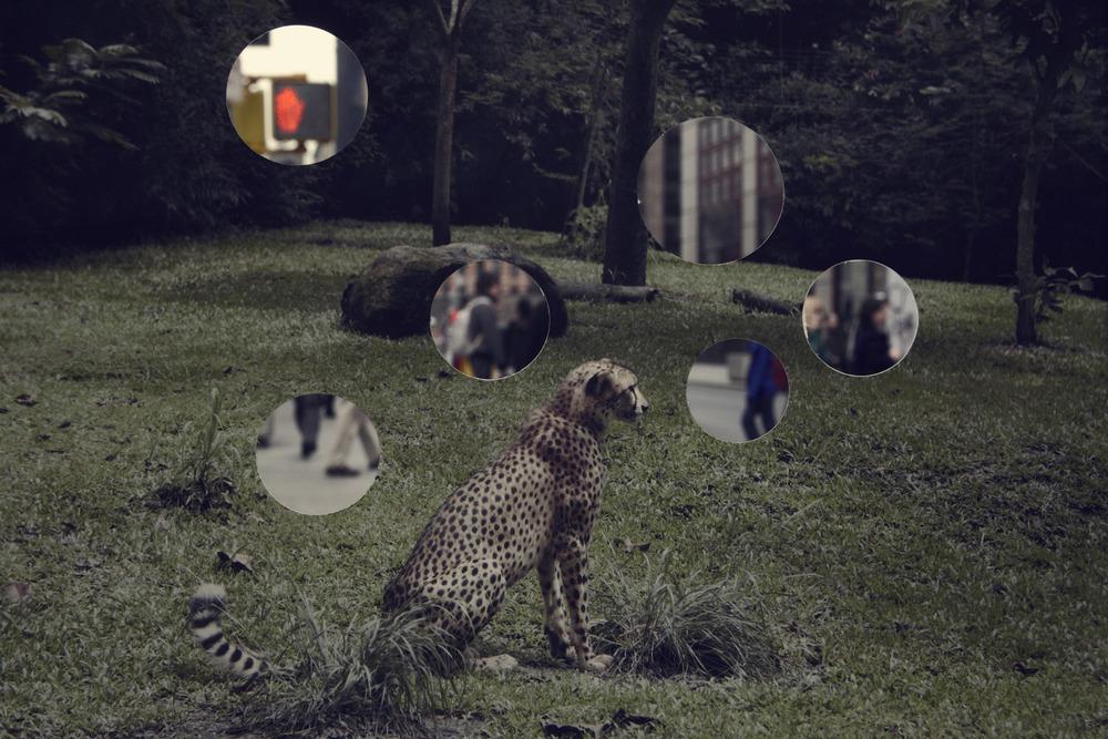 Self Reflection (Cheetah)