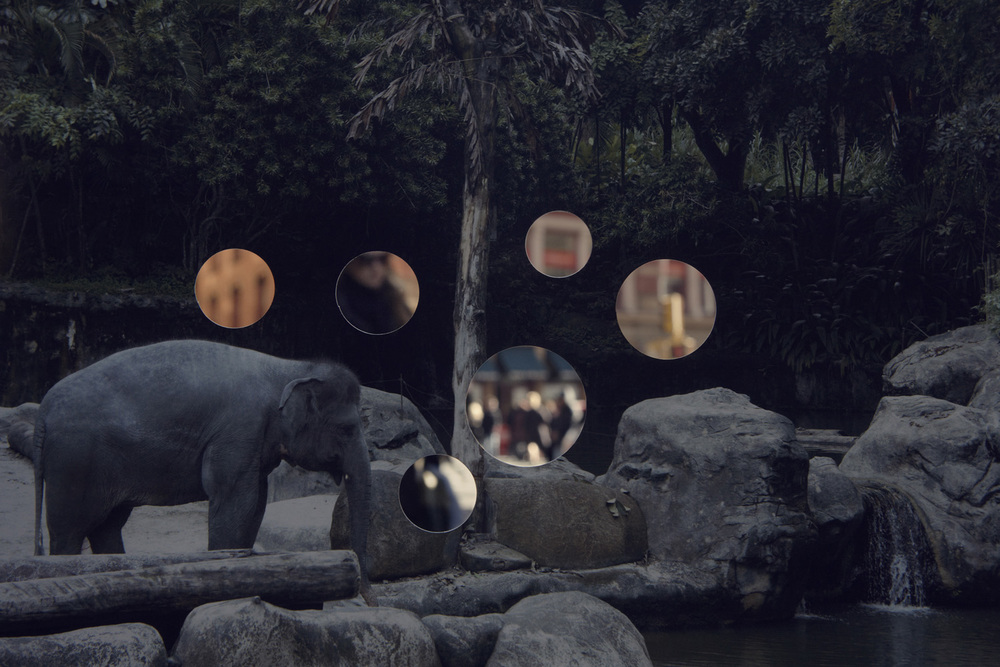 Self Reflection (Elephant)