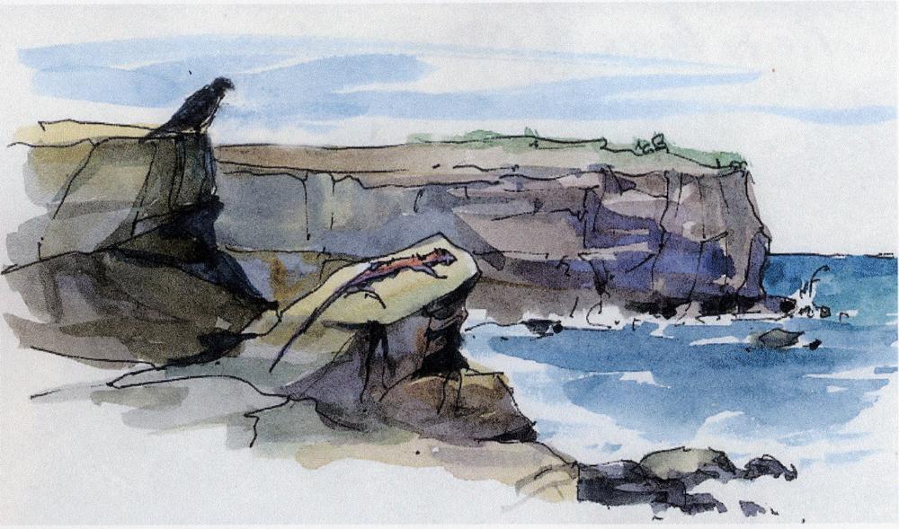 Galapagos Hawk and Marine Iguana