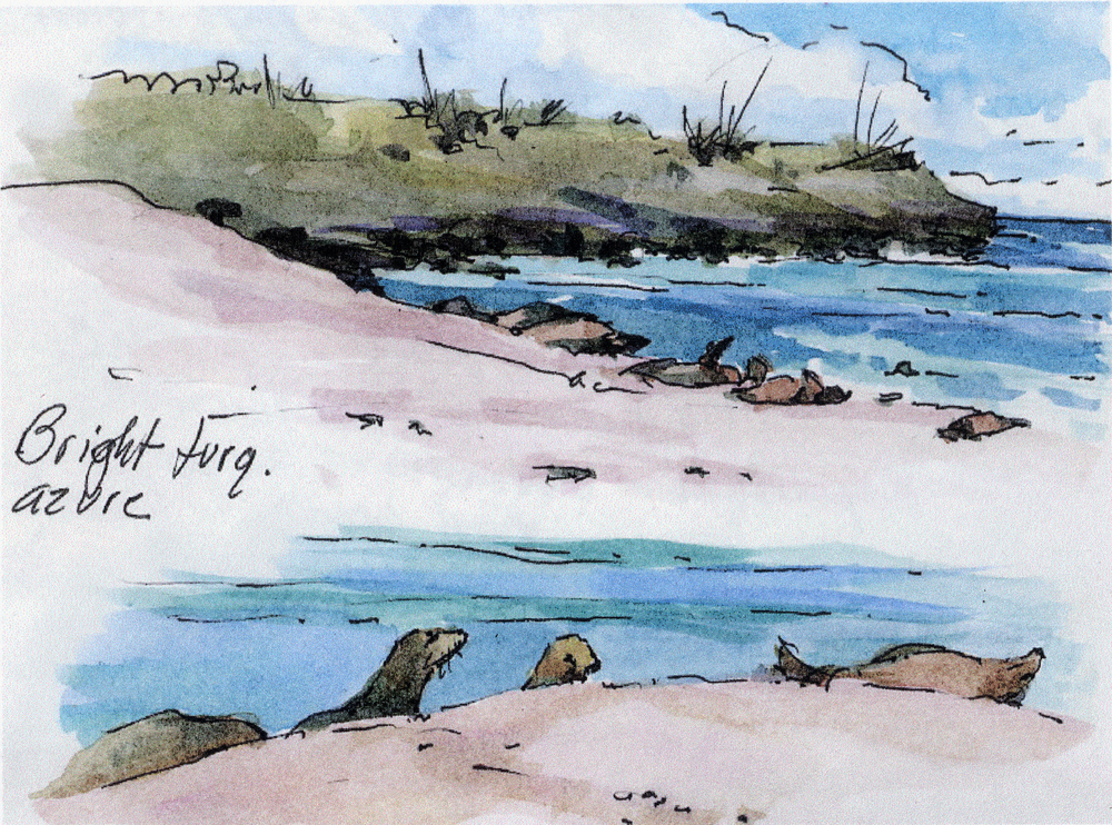 Espanola sea lions