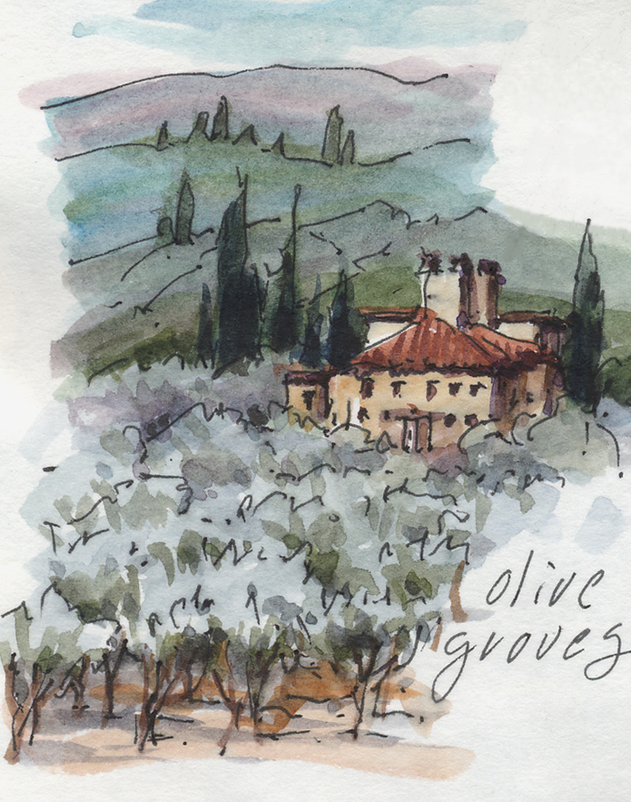 Tuscan Olive Groves
