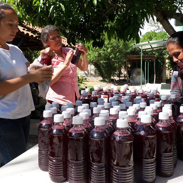 These women are bottling Rosa de Jamaica (Hibiscus) for market at their women's agricultural cooperative, Las Diosas. Local food & integrated farming systems are beautiful!
