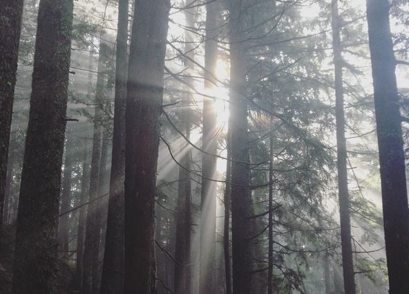 A capture near the top of the Grouse Grind, as the sunlight streamed in through the fog.