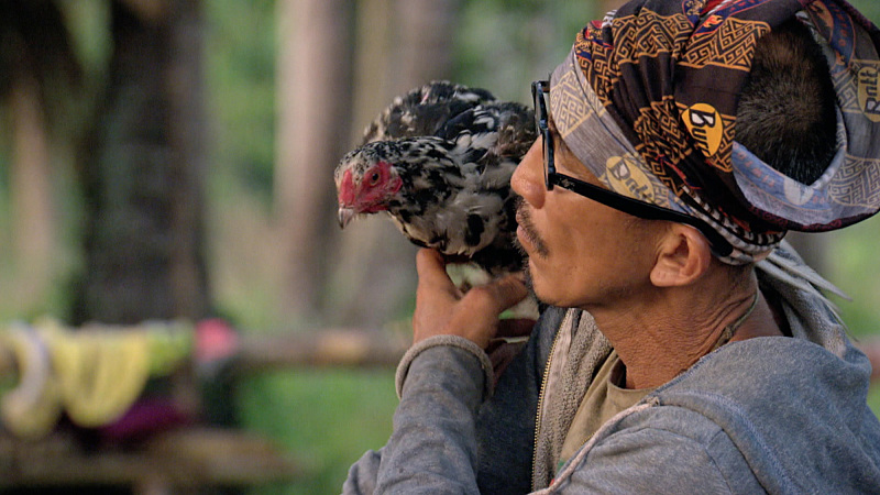 Maybe you can use the chicken to practice your ability to lie convincingly, Tai. Tell it all about how both of you will be making it all the way to day 39. See if you believe yourself.