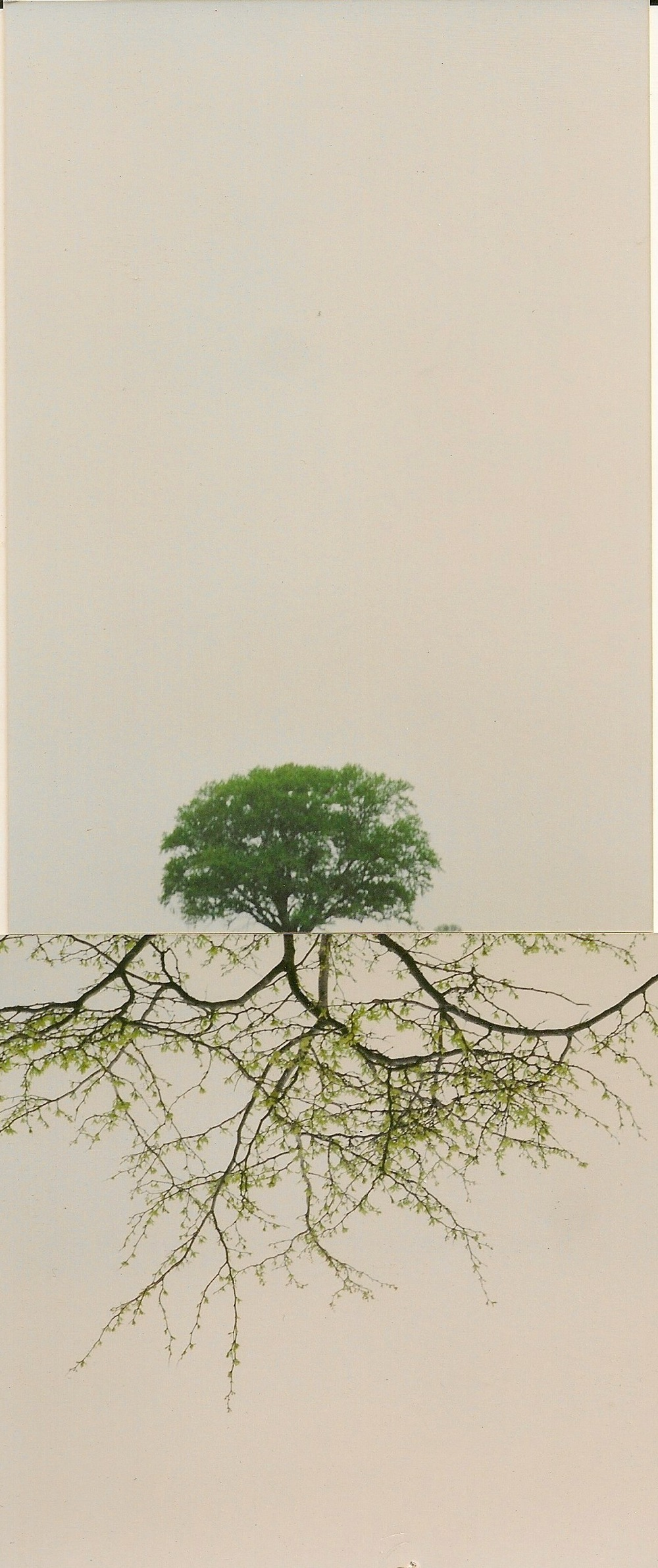 dual landscape 3.jpeg