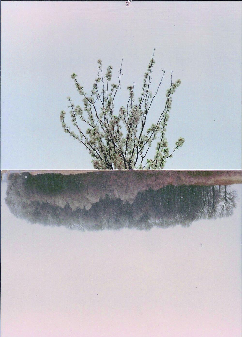 dual landscape1.jpeg