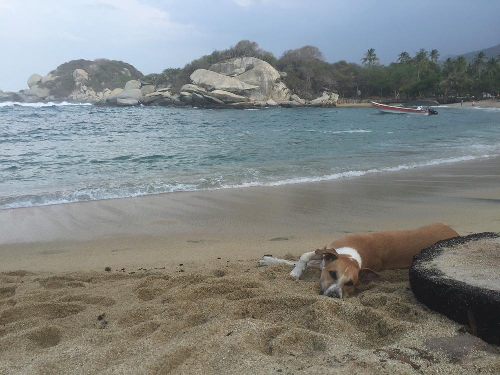 Cachorro relajando