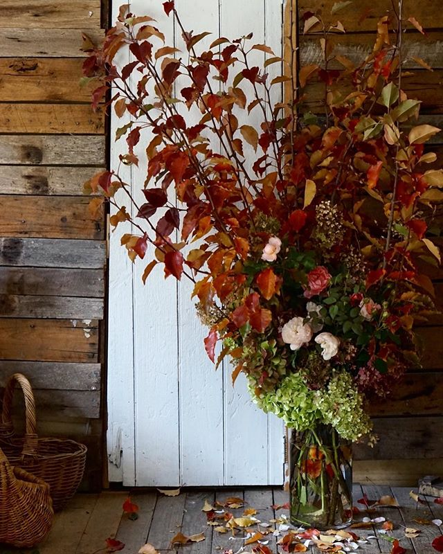 When gestures of life changing kindness turn into autumn bounty thank yous so big you have to arrange them on the floor... ••• (How I am going to get these into the car I have no idea... I might have chosen a new country life but I still have the old [tiny] city car 🚗) . @annabellehickson I was a little over inspired pouring over your beautiful book 'A Tree in the House' today 🍂