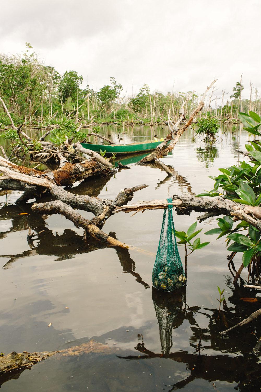mangroves05.jpg
