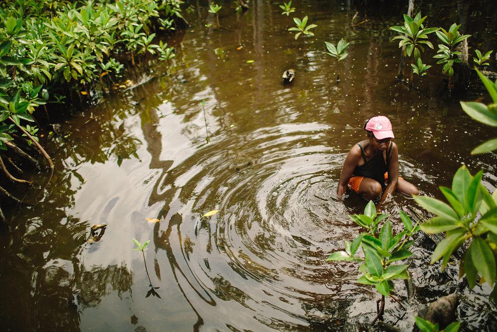 mangroves07.jpg