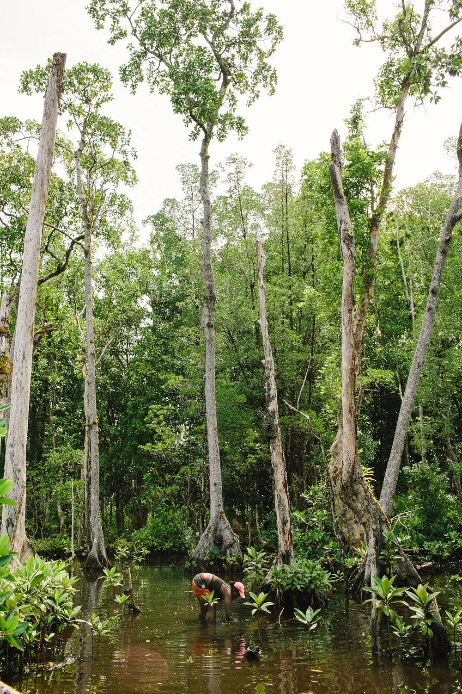 mangroves06.jpg