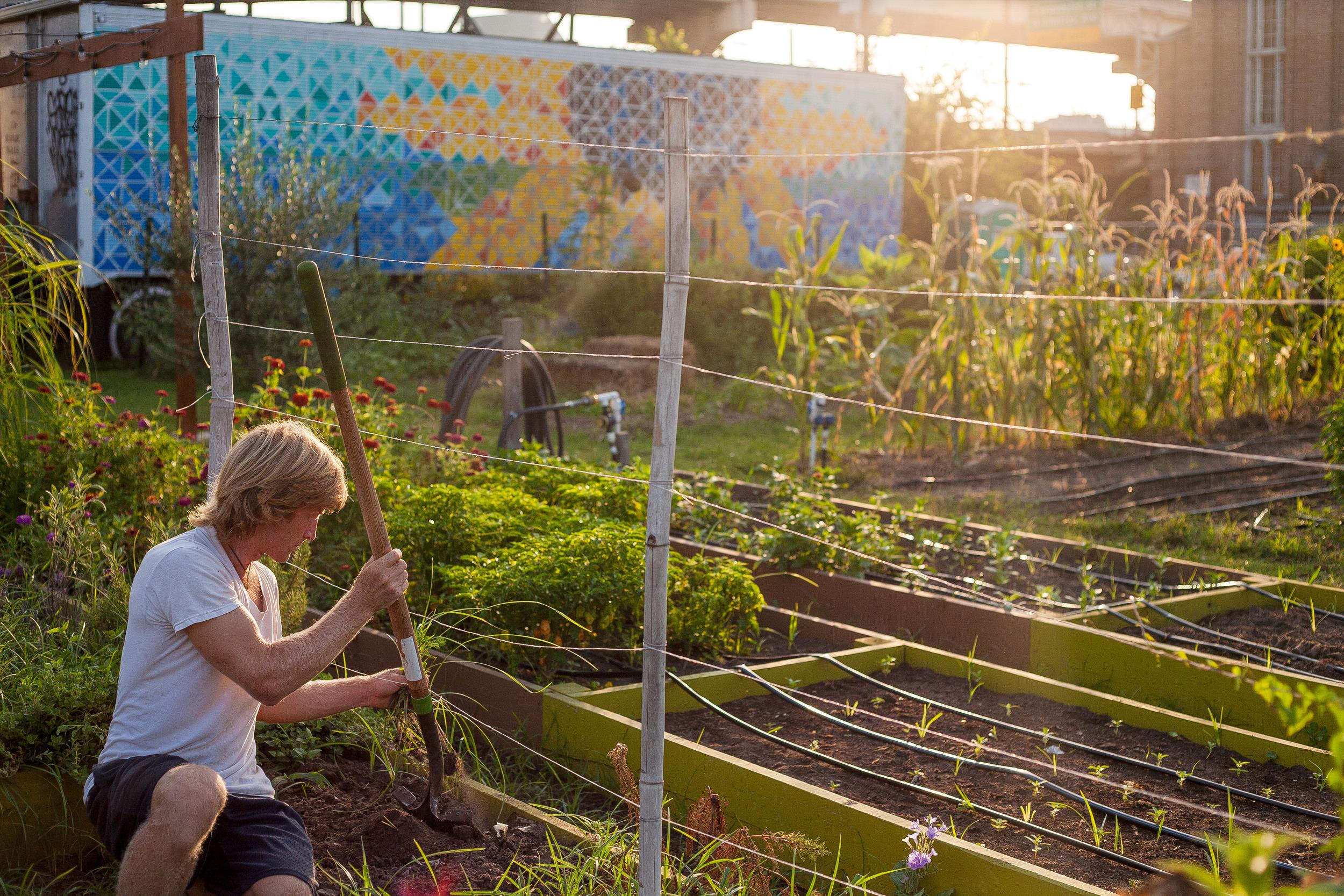Garden tour — Paradigm Gardens