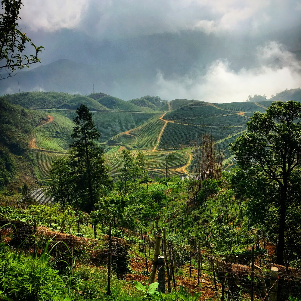 Resume   Like many others, I've taken a few different paths in life to get to where I am now. The resume only provides 2-dimensional view into my work history and ethic. Please feel free to ask me any questions regarding my work history and qualifications. My resume can be downloaded  here .  The image here is of north Vietnam, in the region of Sapa. It was truly spectacular scenery.