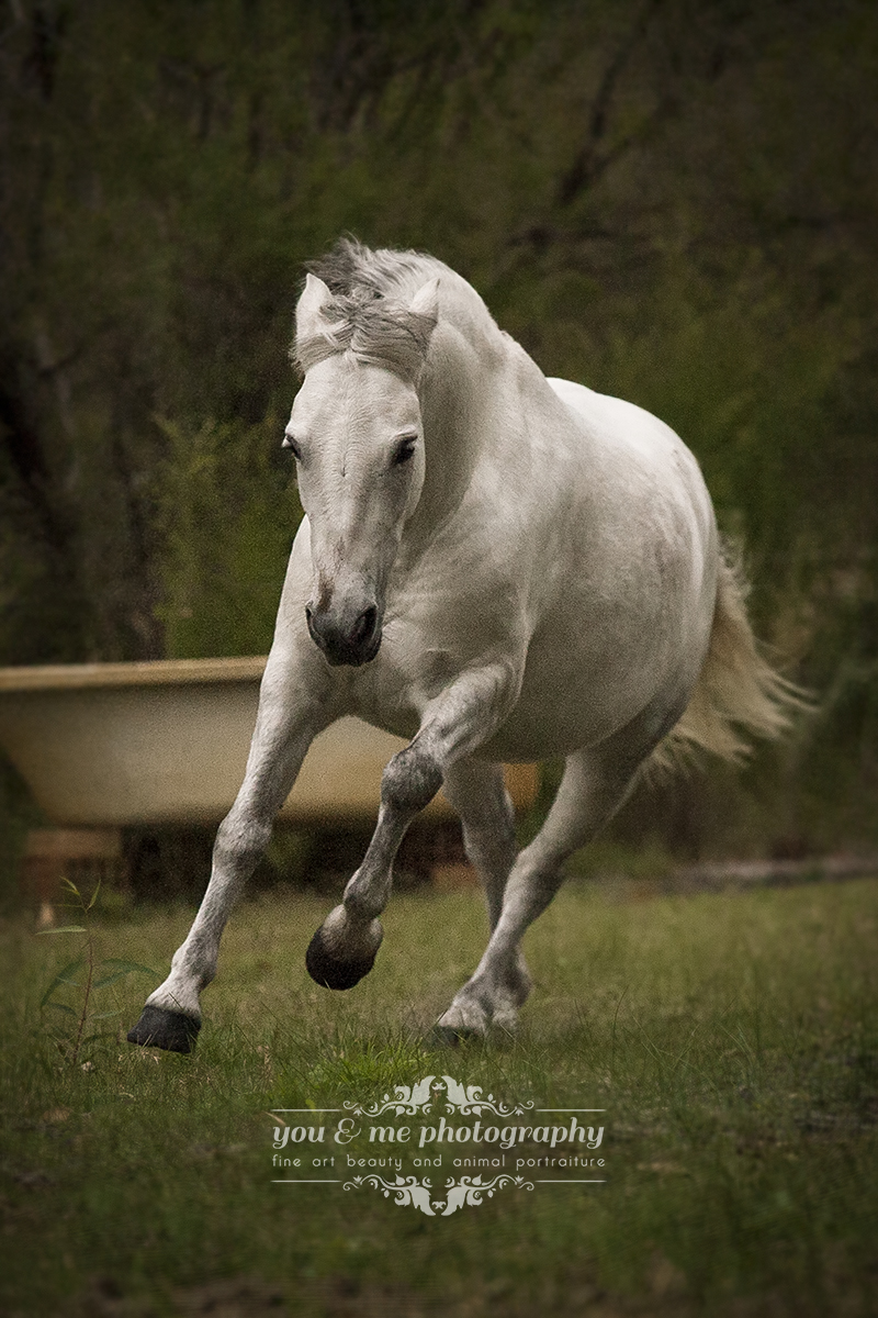 powerful little mare