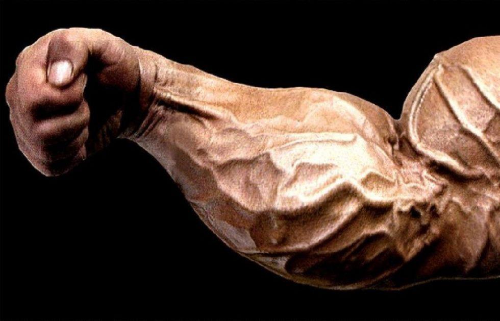 forearms.jpg