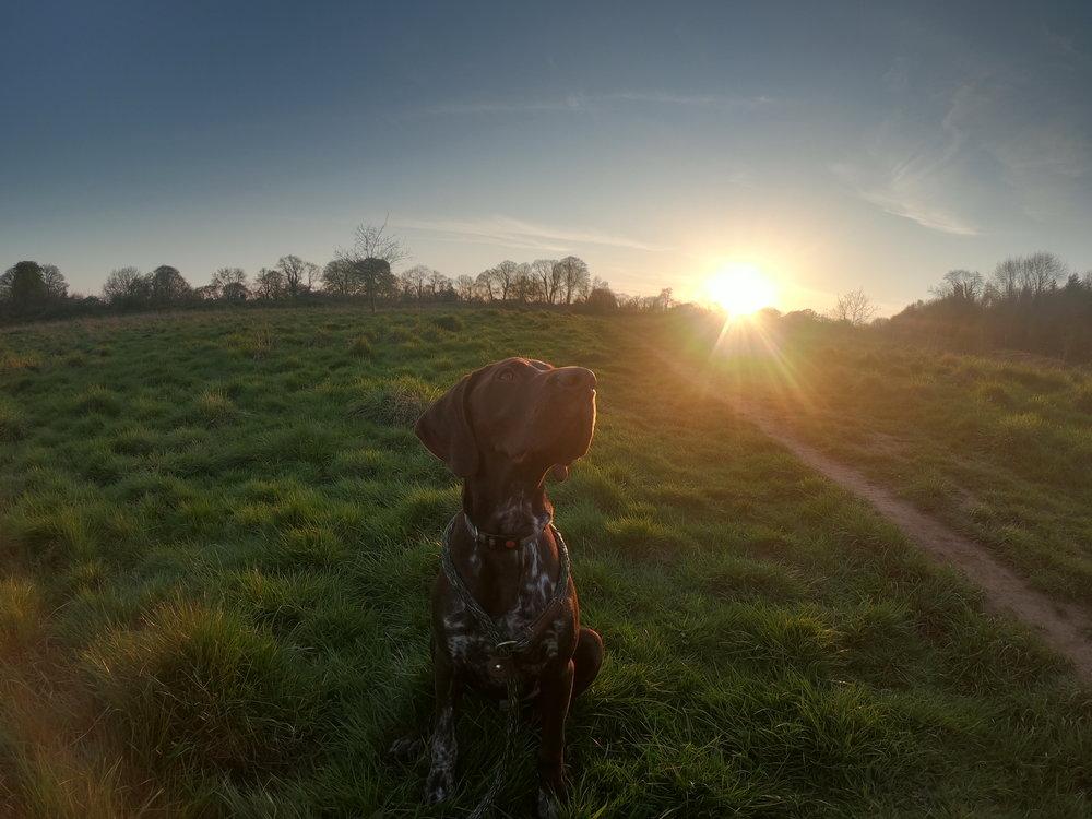Oppo sunset.JPG