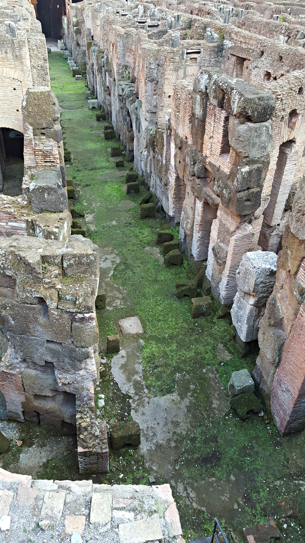 Rows of cages and passages - the Colosseam.jpg