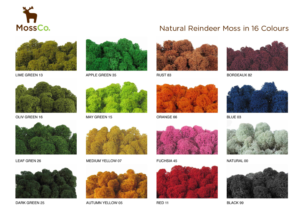 Different natural pigment colours of Reindeer Moss, by Tassels & Tigers Interiors.