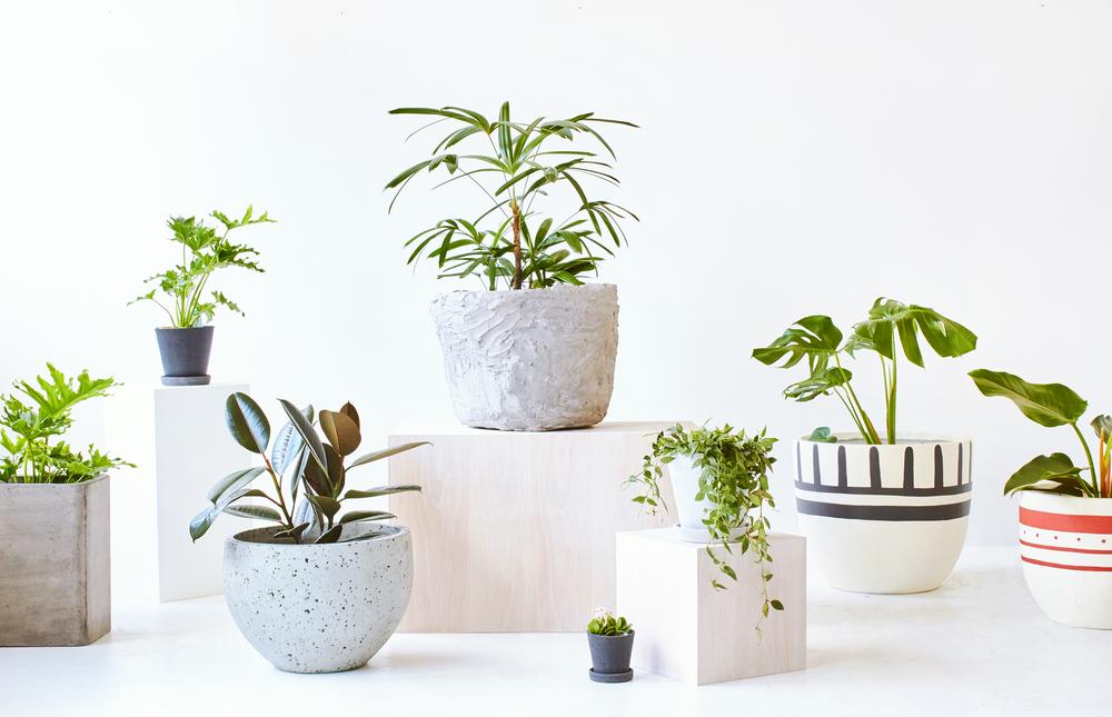 TDF Plants423802.jpg