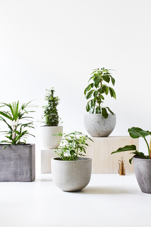 TDP-PLANTS-VERT-01.jpg