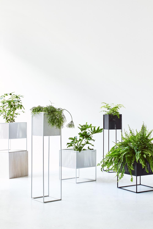 TDP-PLANTS-VERT-02.jpg
