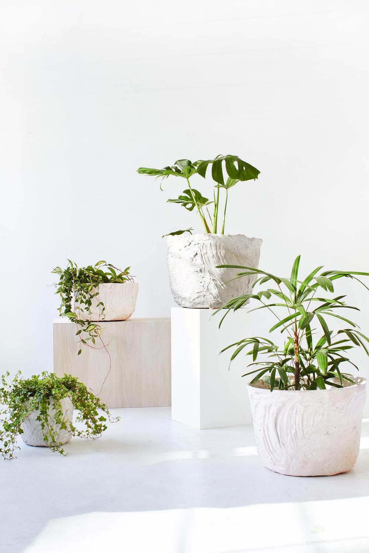 TDP-PLANTS-VERT-04.jpg