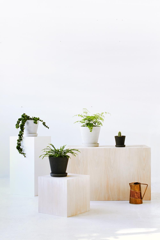 TDP-PLANTS-VERT-05.jpg