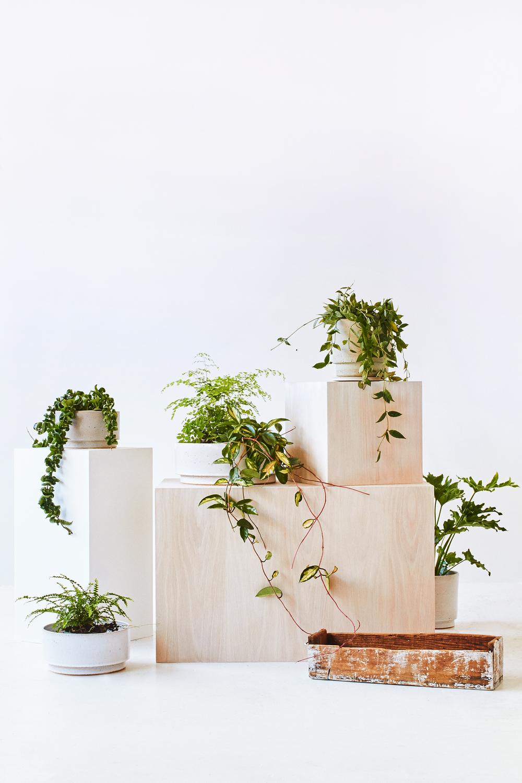 TDP-PLANTS-VERT-06.jpg