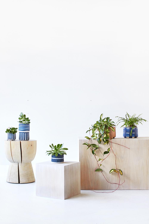 TDP-PLANTS-VERT-07.jpg