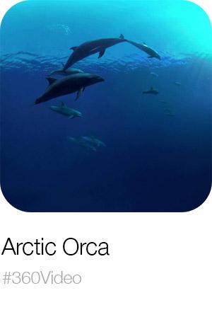 arctic-orca.jpg