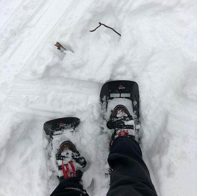 A walk in the woods on a snowy day. #winterwonderland #ilikesnowbutidontlikecold #embracetheseason